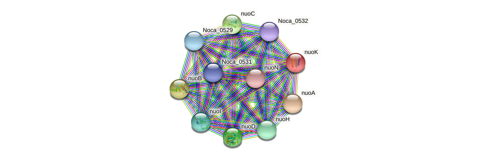 nuoK protein (Nocardioides sp. JS614) - STRING interaction network