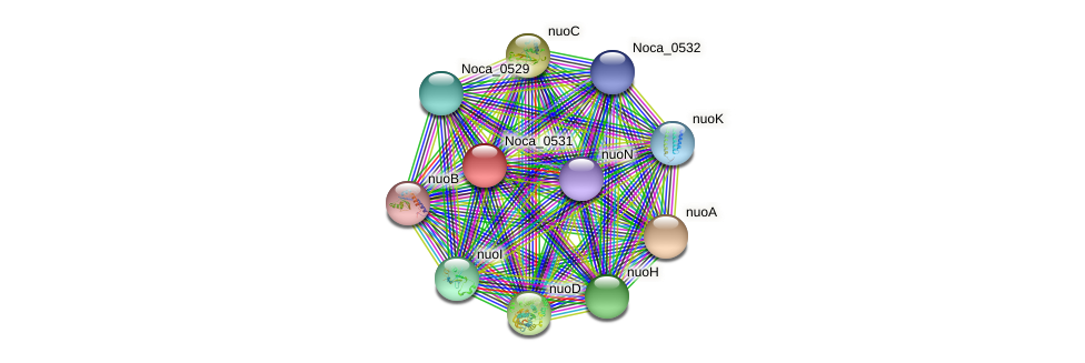 Noca_0531 protein (Nocardioides sp. JS614) - STRING interaction network