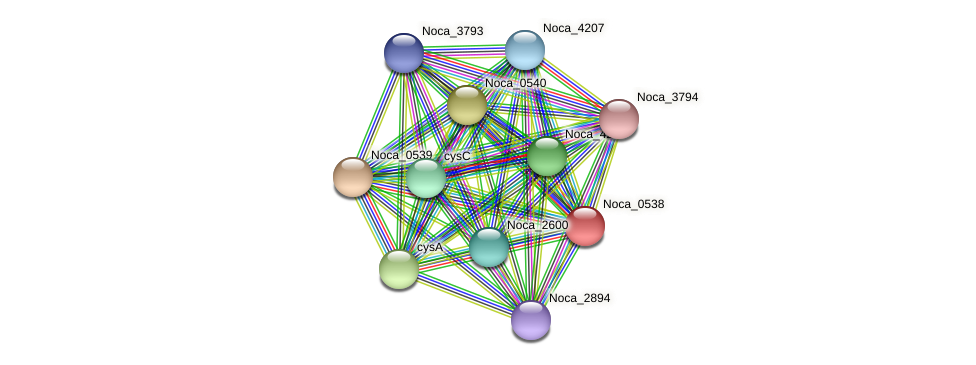 Noca_0538 protein (Nocardioides sp. JS614) - STRING interaction network