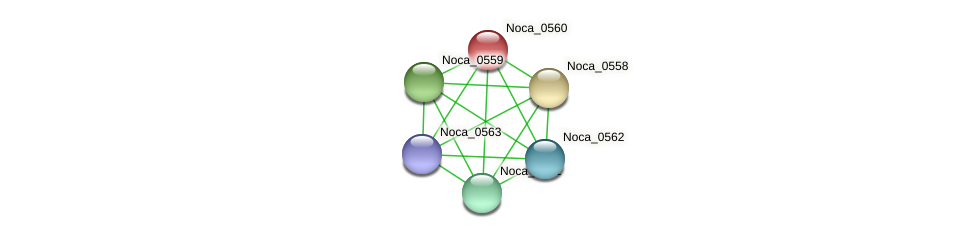 Noca_0560 protein (Nocardioides sp. JS614) - STRING interaction network