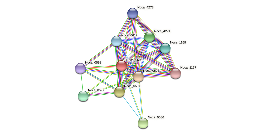 Noca_0595 protein (Nocardioides sp. JS614) - STRING interaction network