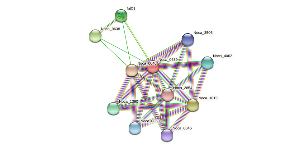 Noca_0639 protein (Nocardioides sp. JS614) - STRING interaction network