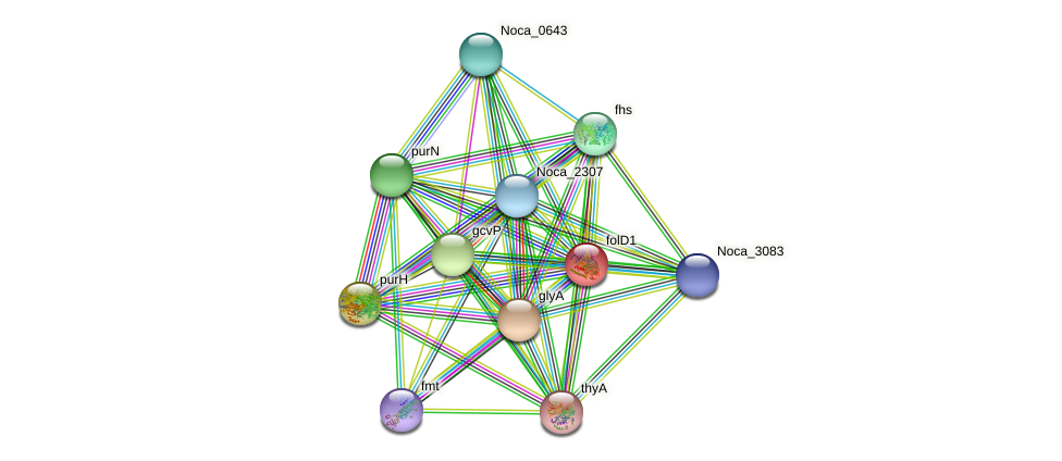 folD1 protein (Nocardioides sp. JS614) - STRING interaction network