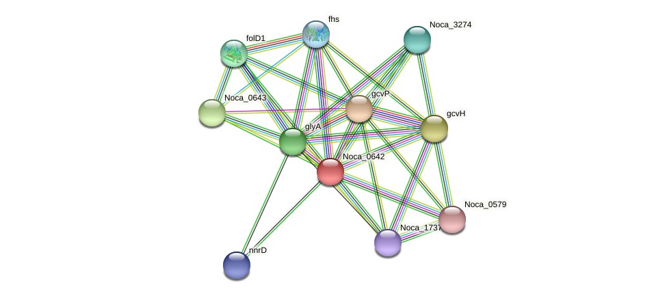 Noca_0642 protein (Nocardioides sp. JS614) - STRING interaction network