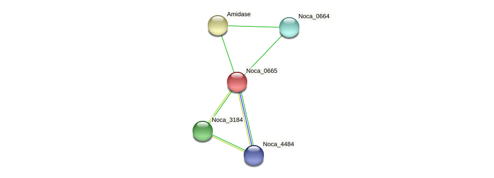 Noca_0665 protein (Nocardioides sp. JS614) - STRING interaction network