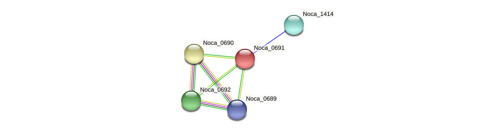 Noca_0691 protein (Nocardioides sp. JS614) - STRING interaction network