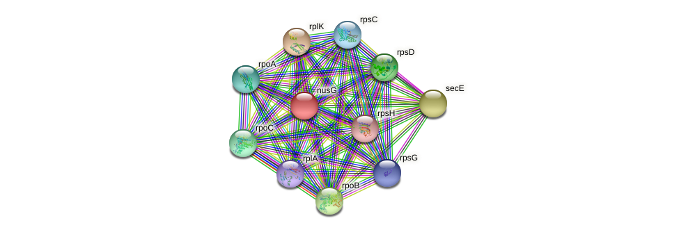 nusG protein (Nocardioides sp. JS614) - STRING interaction network