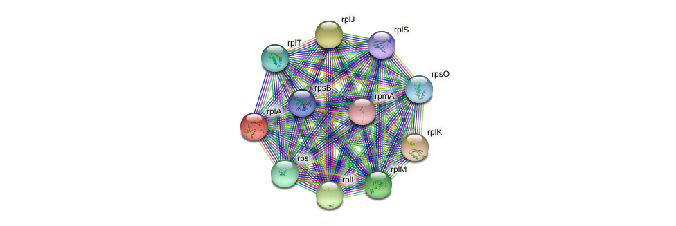 rplA protein (Nocardioides sp. JS614) - STRING interaction network