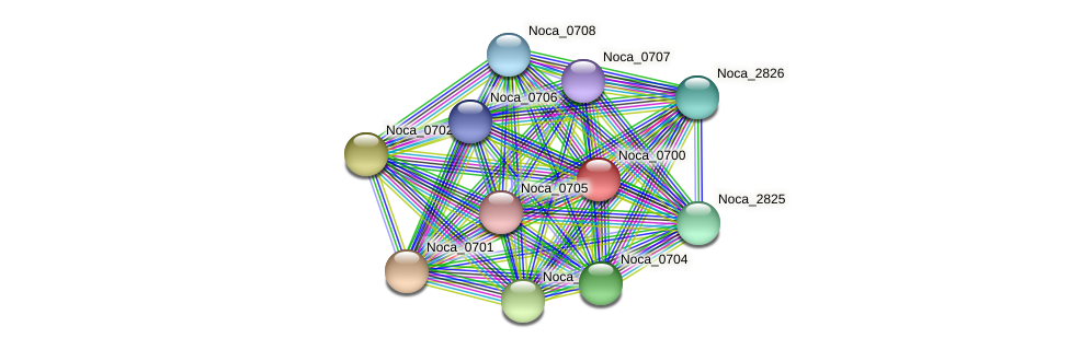 Noca_0700 protein (Nocardioides sp. JS614) - STRING interaction network