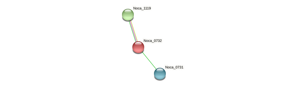 Noca_0732 protein (Nocardioides sp. JS614) - STRING interaction network