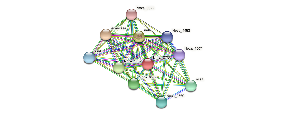 Noca_0733 protein (Nocardioides sp. JS614) - STRING interaction network
