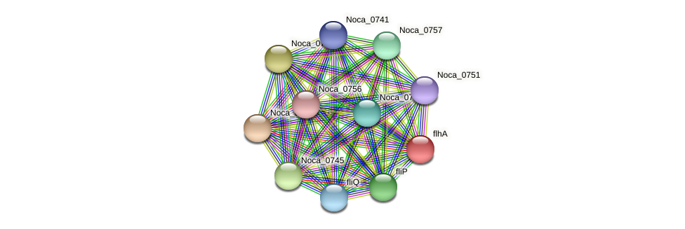 Noca_0739 protein (Nocardioides sp. JS614) - STRING interaction network