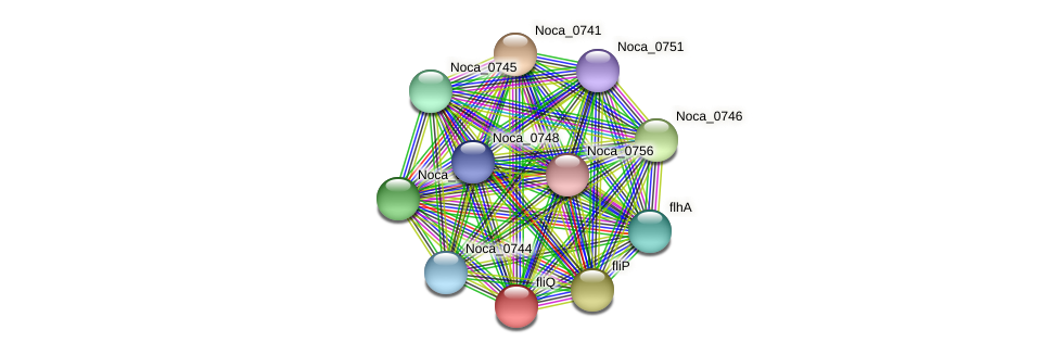 Noca_0742 protein (Nocardioides sp. JS614) - STRING interaction network