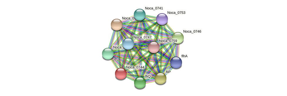 Noca_0744 protein (Nocardioides sp. JS614) - STRING interaction network