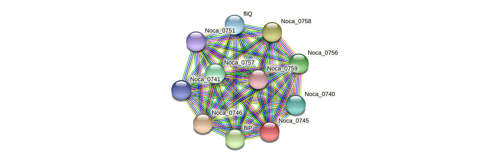 Noca_0745 protein (Nocardioides sp. JS614) - STRING interaction network