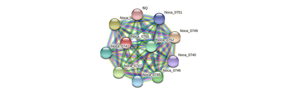 Noca_0750 protein (Nocardioides sp. JS614) - STRING interaction network