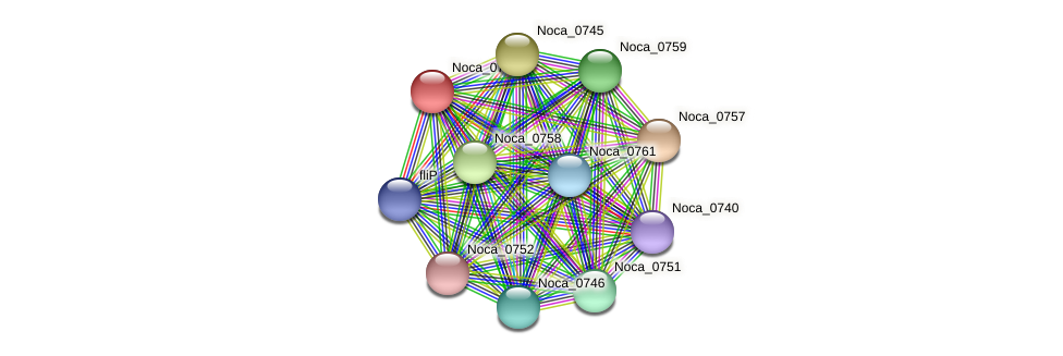 Noca_0756 protein (Nocardioides sp. JS614) - STRING interaction network