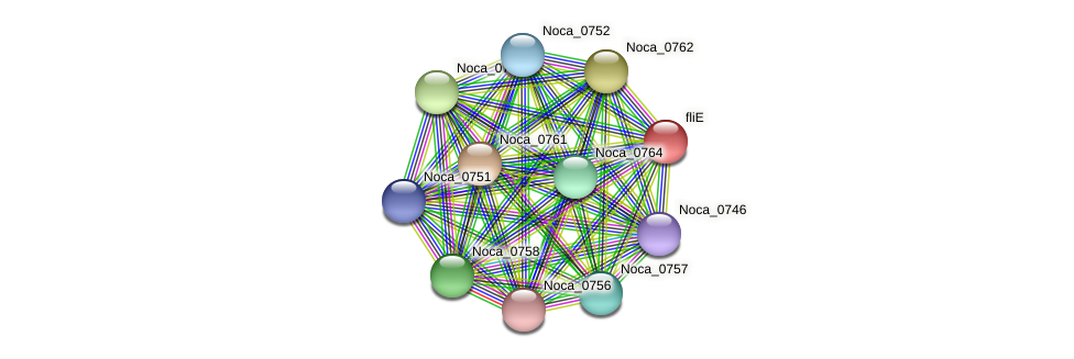 fliE protein (Nocardioides sp. JS614) - STRING interaction network