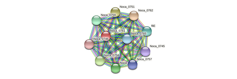 Noca_0761 protein (Nocardioides sp. JS614) - STRING interaction network