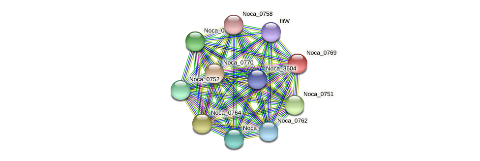 Noca_0769 protein (Nocardioides sp. JS614) - STRING interaction network