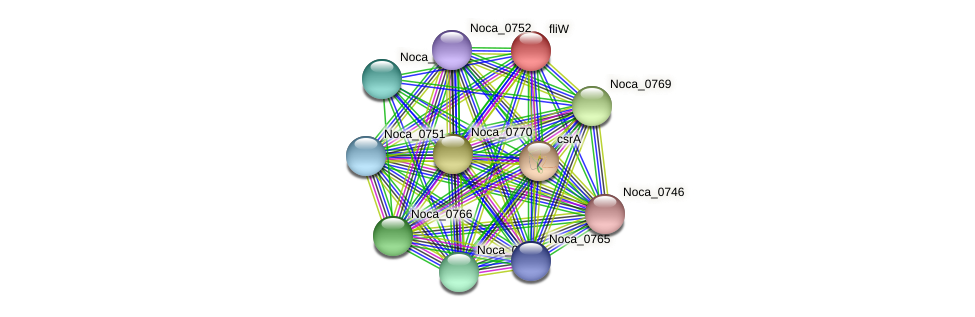 fliW protein (Nocardioides sp. JS614) - STRING interaction network