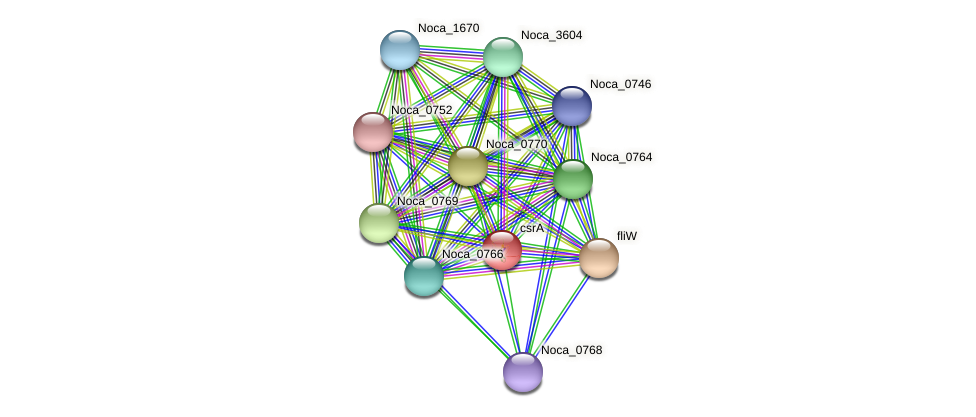 csrA protein (Nocardioides sp. JS614) - STRING interaction network