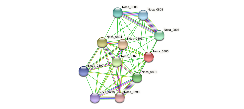 Noca_0805 protein (Nocardioides sp. JS614) - STRING interaction network