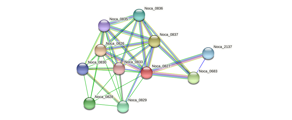 Noca_0827 protein (Nocardioides sp. JS614) - STRING interaction network