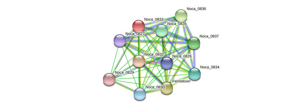 Noca_0833 protein (Nocardioides sp. JS614) - STRING interaction network