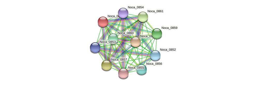 Noca_0858 protein (Nocardioides sp. JS614) - STRING interaction network