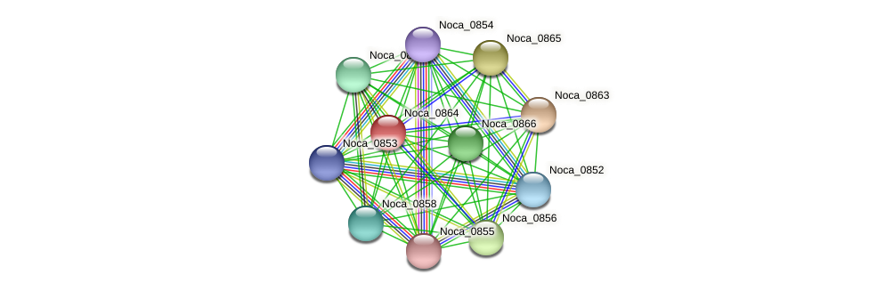 Noca_0864 protein (Nocardioides sp. JS614) - STRING interaction network