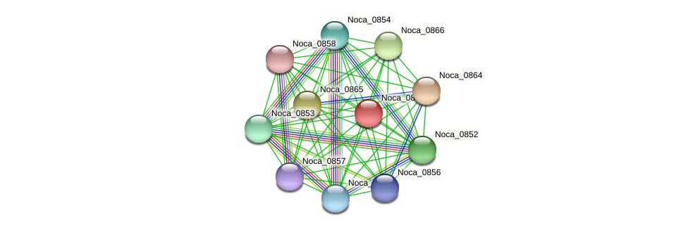 Noca_0867 protein (Nocardioides sp. JS614) - STRING interaction network