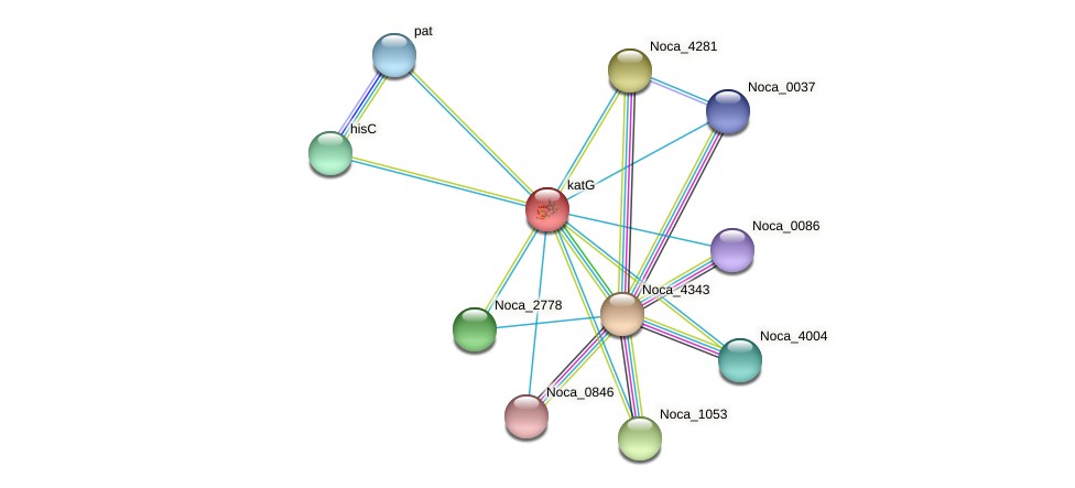 katG protein (Nocardioides sp. JS614) - STRING interaction network
