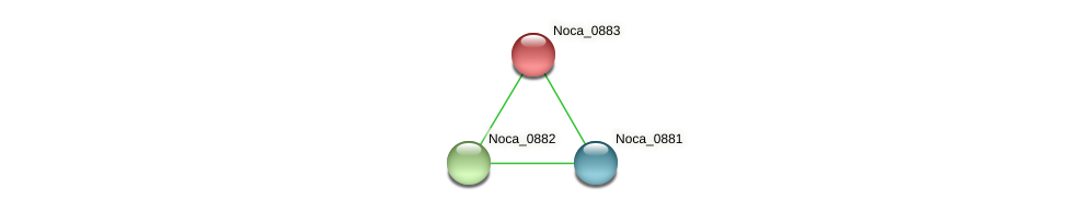 Noca_0883 protein (Nocardioides sp. JS614) - STRING interaction network