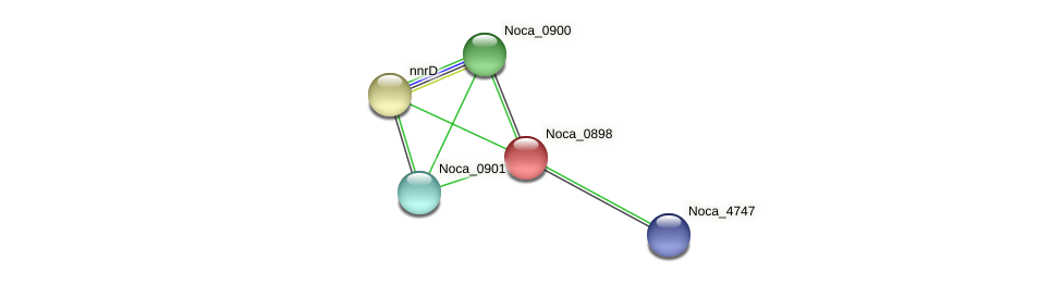 Noca_0898 protein (Nocardioides sp. JS614) - STRING interaction network