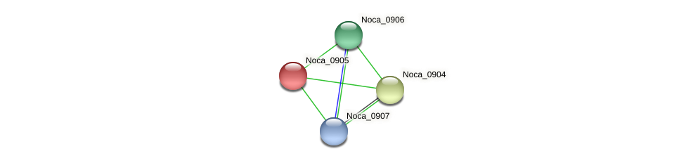 Noca_0905 protein (Nocardioides sp. JS614) - STRING interaction network