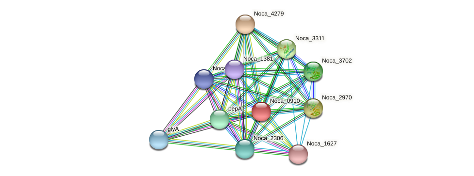 Noca_0910 protein (Nocardioides sp. JS614) - STRING interaction network