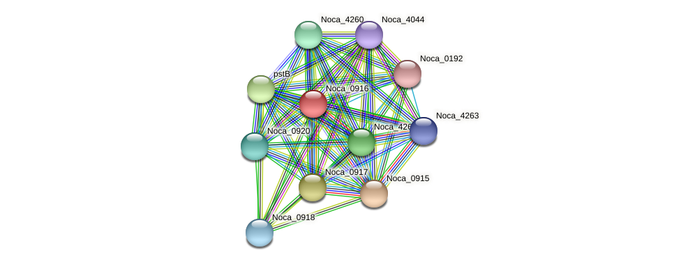 Noca_0916 protein (Nocardioides sp. JS614) - STRING interaction network