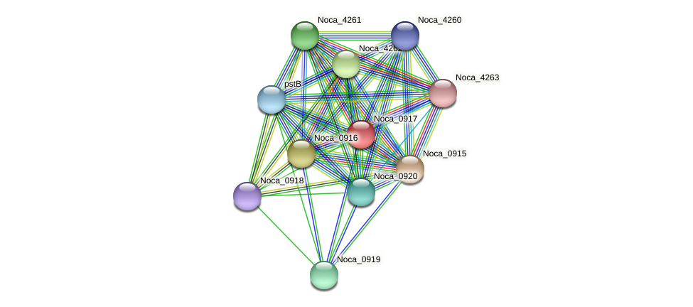 Noca_0917 protein (Nocardioides sp. JS614) - STRING interaction network