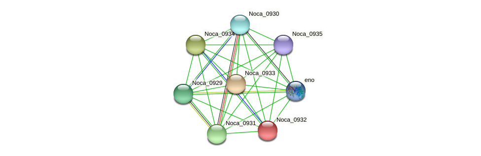 Noca_0932 protein (Nocardioides sp. JS614) - STRING interaction network