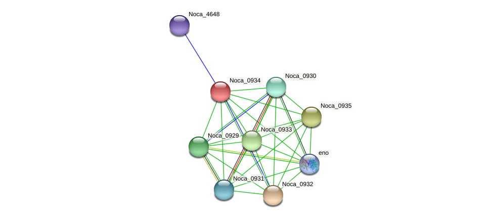 Noca_0934 protein (Nocardioides sp. JS614) - STRING interaction network