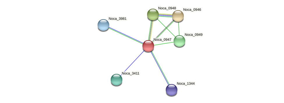 Noca_0947 protein (Nocardioides sp. JS614) - STRING interaction network