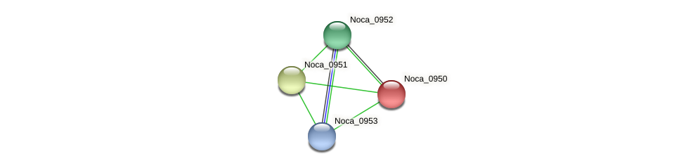 Noca_0950 protein (Nocardioides sp. JS614) - STRING interaction network