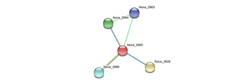 Noca_0965 protein (Nocardioides sp. JS614) - STRING interaction network