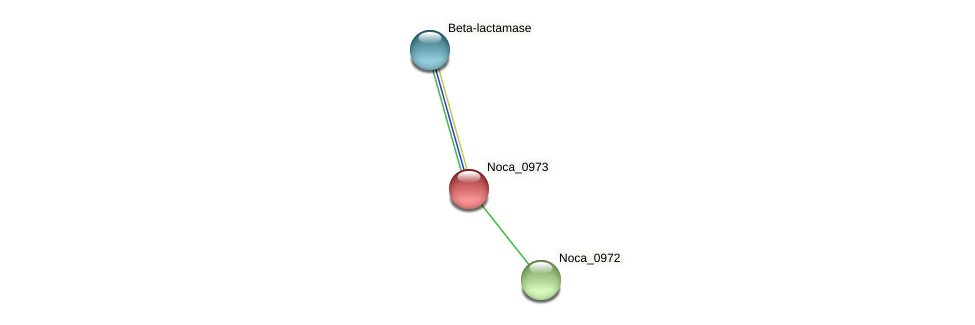 Noca_0973 protein (Nocardioides sp. JS614) - STRING interaction network
