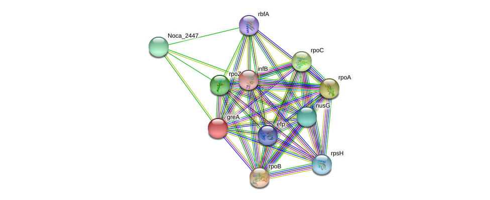 greA protein (Nocardioides sp. JS614) - STRING interaction network