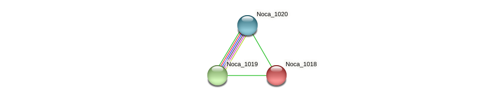 Noca_1018 protein (Nocardioides sp. JS614) - STRING interaction network