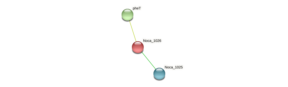 Noca_1026 protein (Nocardioides sp. JS614) - STRING interaction network