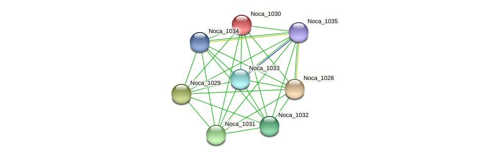 Noca_1030 protein (Nocardioides sp. JS614) - STRING interaction network