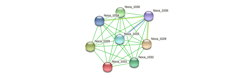 Noca_1031 protein (Nocardioides sp. JS614) - STRING interaction network